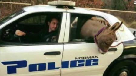 151202003313-oklahoma-donkey-police-car-ride-pkg-00005306-exlarge-169
